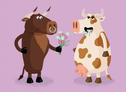 carte-vache