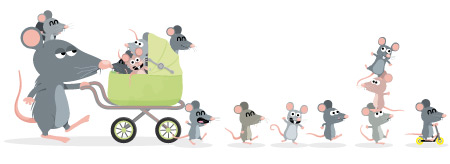 famille-rats